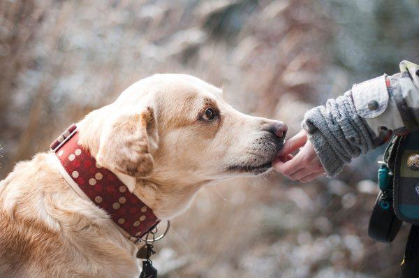 Wat moet je doen bij een hondenbeet?